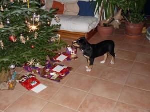 neugierig beim Weihnachtsbaum